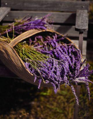 Lavender-basket-0908-de-59861936